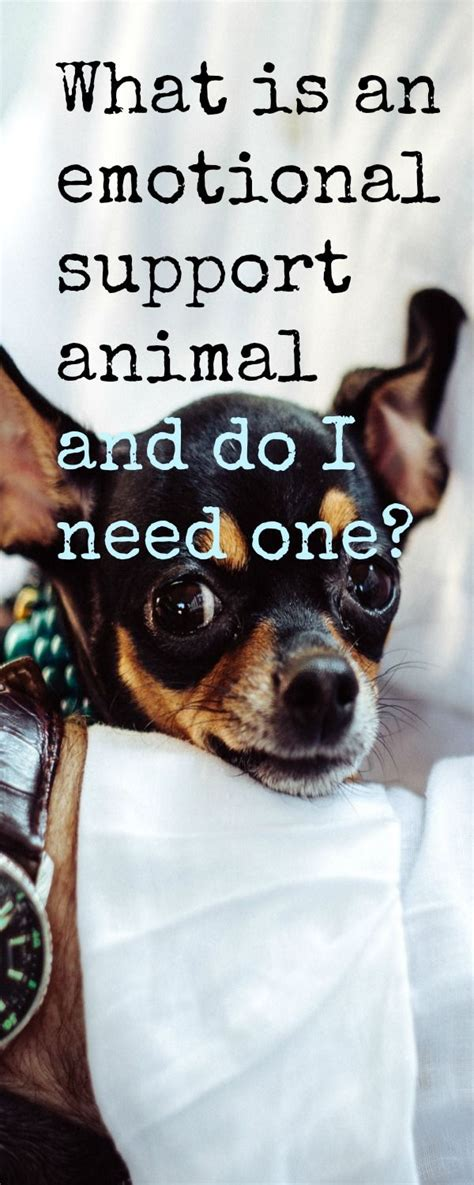 what is an emotional support best 25 emotional support animal ideas on