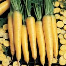Bibit Benih Seeds Cabe Kuning Pedas Yellow bibit cabe bhut jolokia merah bhut jolokia