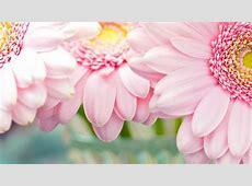 Baby pink flowers wallpapers mightylinksfo