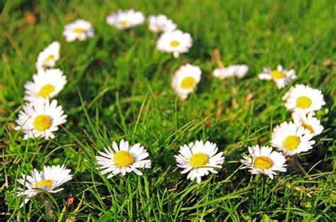 linguaggio fiori amicizia linguaggio dei fiori full frasi e aforismi straordinari