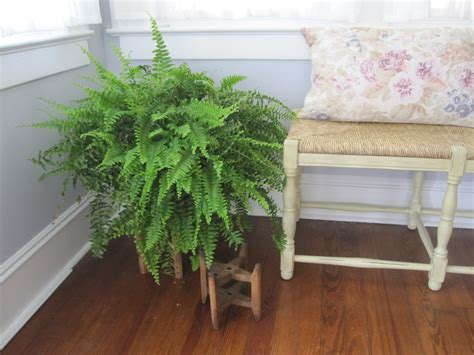 fern decor renovation and decoration report