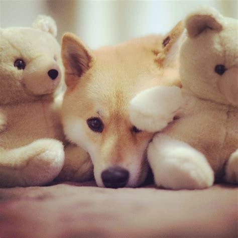 instagram dog the most popular dog on instagram