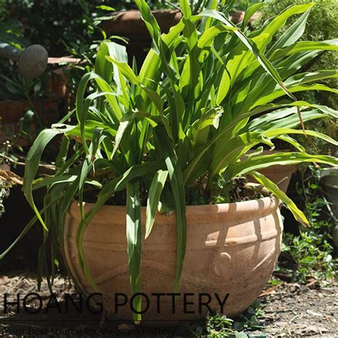 Terracotta Garden Decor Terracotta Pot Garden Decor Hptc012
