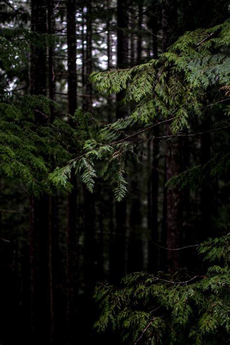 los bosques ibericos practicos m 225 s de 25 ideas incre 237 bles sobre bosque tenebroso en bosques bosque y ley de bosques