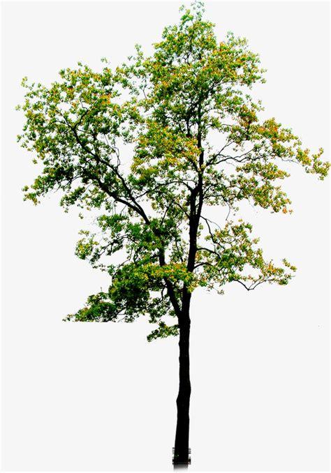 alberi clipart albero albero verde i rami immagine png e clipart per il