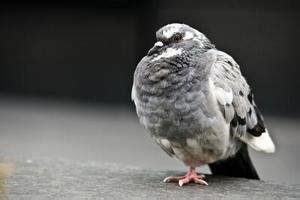 come deter birds russelmobley com