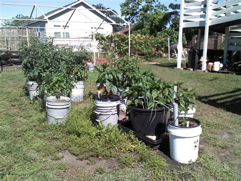 You Can Grow Vegetables In Containers 5 Gallon Vegetable Garden