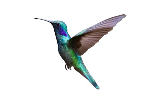 colorful hummingbird flying png image purepng free