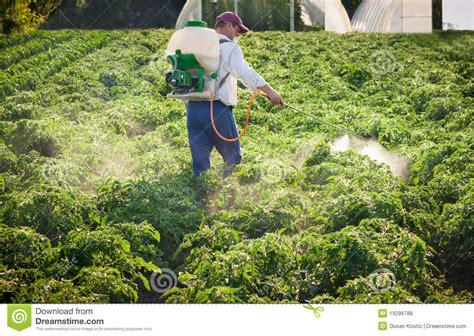 man spraying vegetables royalty  stock  image