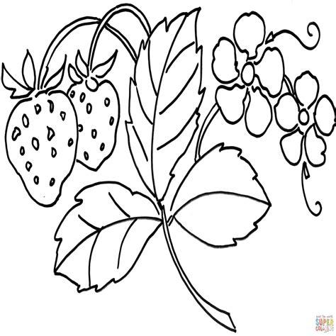 disegni da stare e colorare fiori disegni di fiori colorati disegno di fiore di fragola da