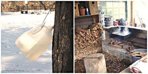 backyard maple syrup backyard maple sugaring inner nature design interior