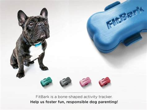 fitbit for dogs fitbark world s tiniest wireless activity tracker for dogs by fitbark kickstarter