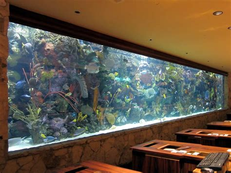 blue small aquarium designs image gallery large in wall aquarium