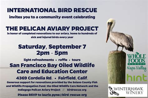 international bird rescue every bird matters 187 blog