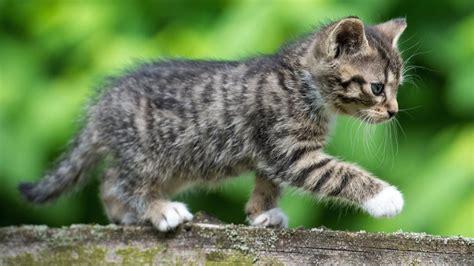 ab wann kann katzen decken lassen ab wann darf ich die kleinen k 228 tzchen in den garten lassen