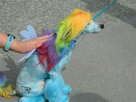 rainbow puppy wondercon day 1 171 fangirl xanadu