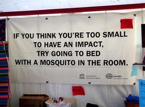 mosquito in my room it s not the size