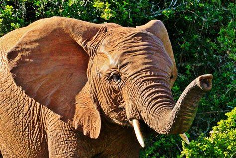 Animal World 5 free images animal portrait bush elephant