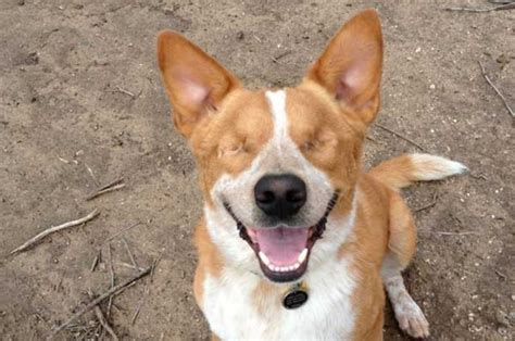 special needs dogs special needs senior from tucson needs a home