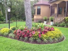 lanscaping ideas quot red flash quot caladiums and melodium landscaping