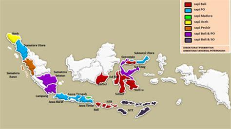 Bibit Sapi Di Ntt sumber bibit sapi potong lokal di indonesia