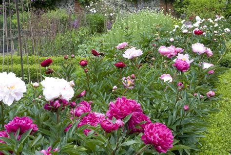 grow beautiful fall flowering perennials what is a perennial flower or plant