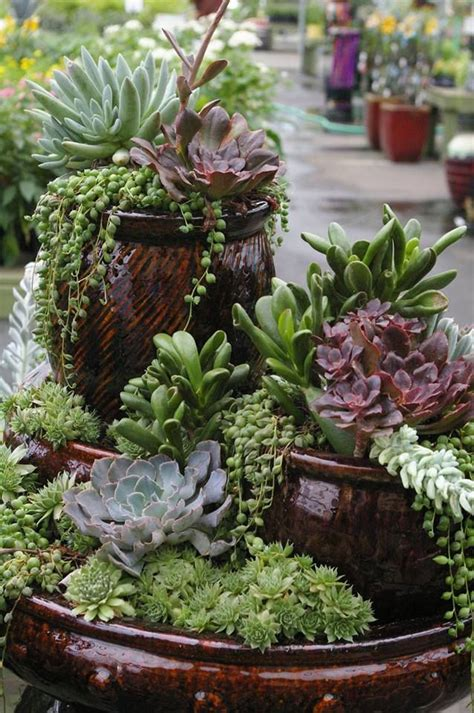 succulents container gardens succulents are a great low maintenance way to add