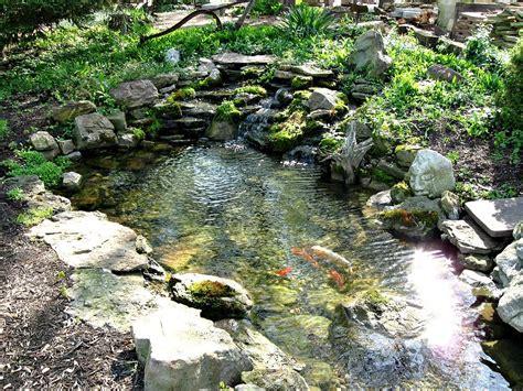 small koi pond images