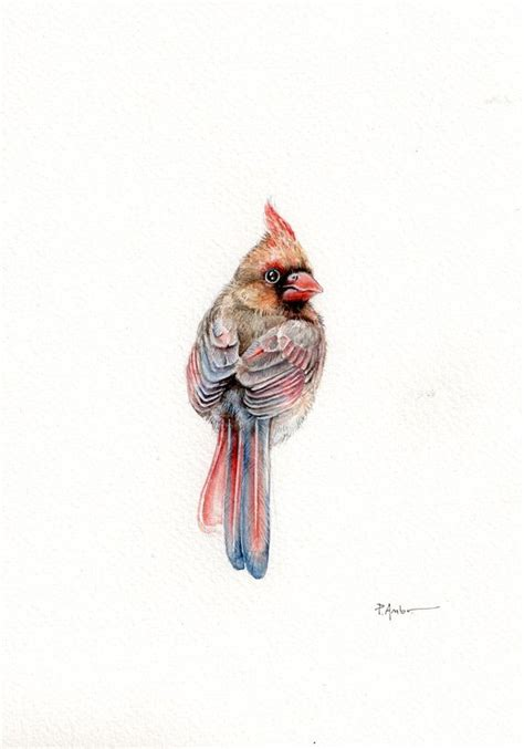watercolor cardinal tattoo best 25 cardinal tattoos ideas on bird