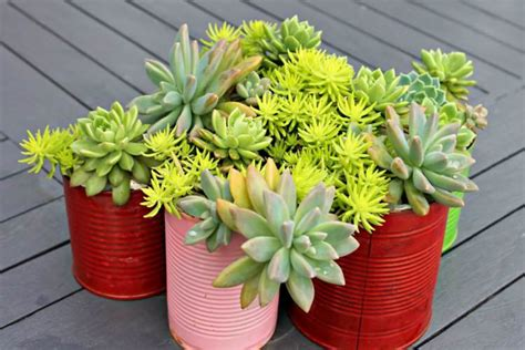 Indoor Succulent Planter by 15 Best Indoor Succulent Planting Ideas That Can Beautify