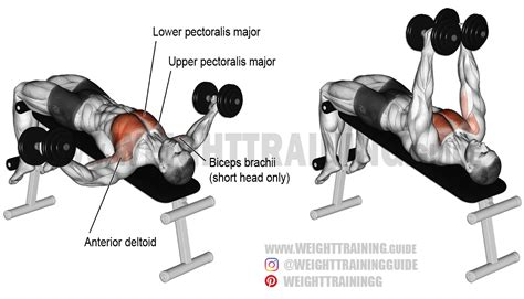 bench press with dumbbell decline dumbbell fly exercise instructions and video