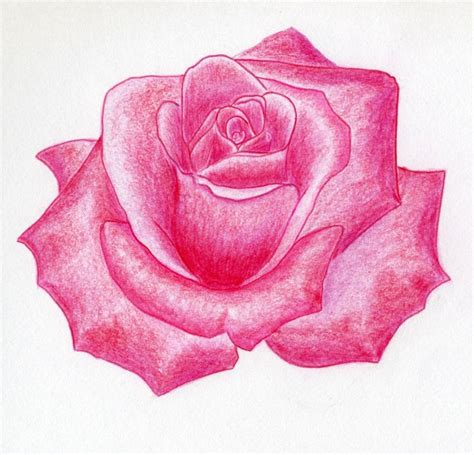 pink flowers drawing at getdrawings com free for