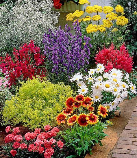 garten stauden bunter staudengarten 9 pflanzen g 252 nstig kaufen