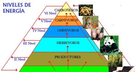 cadenas redes y piramides troficas wikipedia 201 tica y entorno 11 2 desarrollo gu 237 a dos