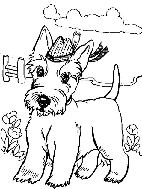 scottish terrier colouring page st andrew s day