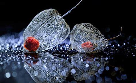 inspiring examples  macro flower photography mnn