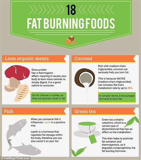 healthy fats help you lose weight the 18 burning foods that will help you lose weight