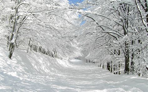 imagenes hd nieve thick snow trees pretty path wallpapers thick snow