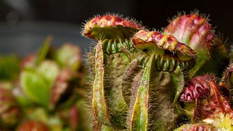 best carnivorous plants carnivorous plants around the globe use similar deadly