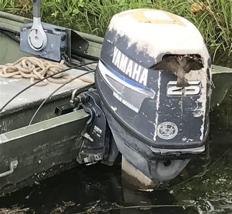 old yamaha boat motor swallow nesting in yamaha boat motor celebrate urban birds