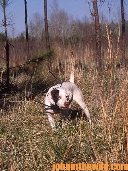 what should sportsman always consider when hunting from a boat consider buying an older bird dog to hunt quail john in