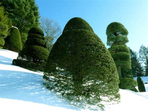 beautiful trees 20 most beautiful trees around the world for your inspiration