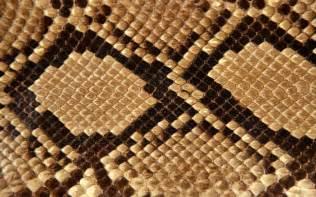 wallpapers snake skin wallpapers