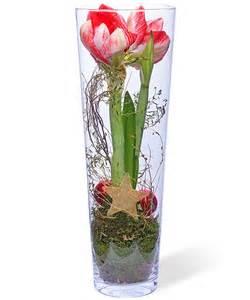 dekoration mit amaryllis amaryllis im glas jetzt bestellen bei valentins
