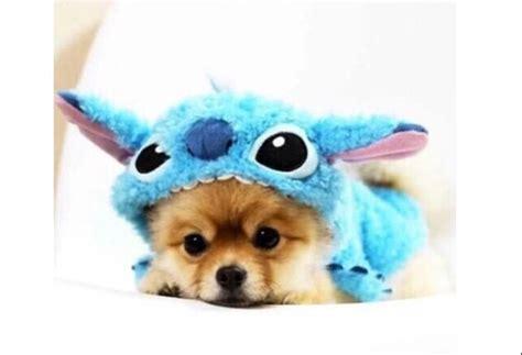 puppy onesies puppy stitch onesie on the hunt