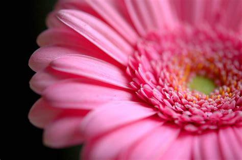 significato dei fiori rosa significato fiori rosa linguaggio dei fiori