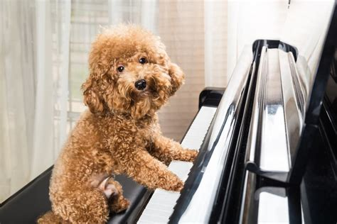 wholetones for dogs 5 ways can help ease your s anxiety the dogington post