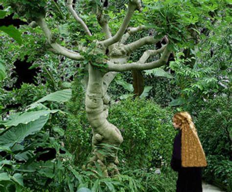 brazilian tale   girl   fig tree