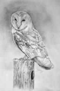 barn owl pencil drawing on etsy birds owls pinterest