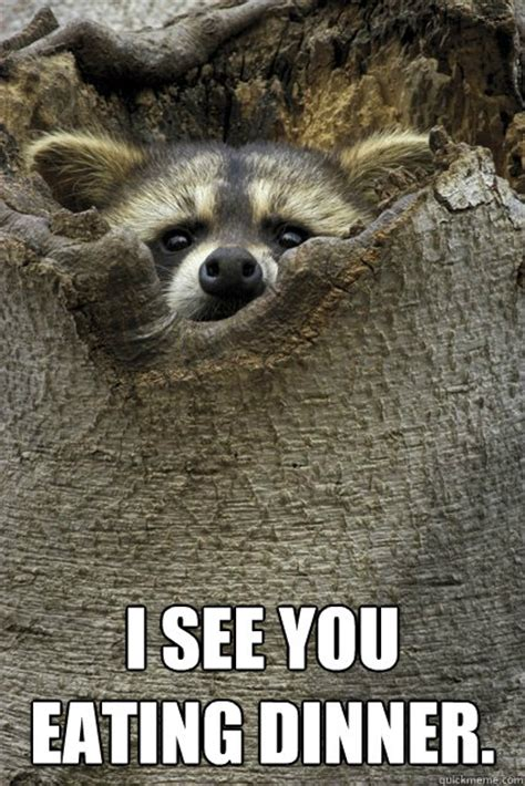 Funny Raccoon Meme - stalker raccoon memes quickmeme